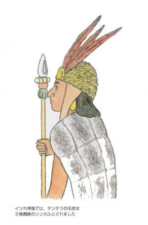 インカ帝国の王侯貴族のシンボルとしてチンチラの毛皮が用いられた
