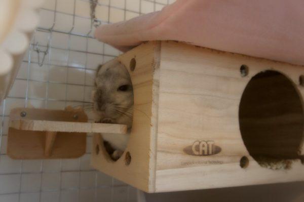 チンチラのティモのゲージレイアウト 遊び用の巣箱はKAWAI フルハウス