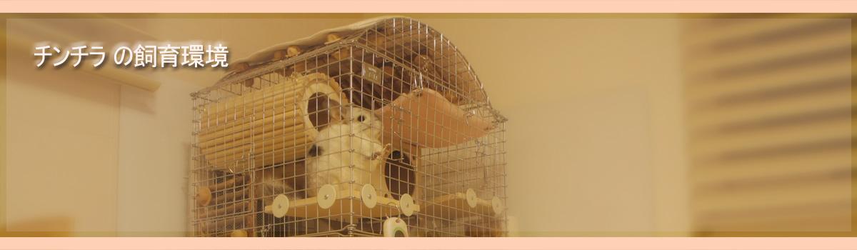 Chinchilla Vie -チンチラ「ティモ」とこだわり屋の生活- チンチラの飼育環境