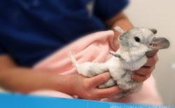 「うさぎと鳥・小動物の専門病院 バニーグラス」さんで診察を受けました