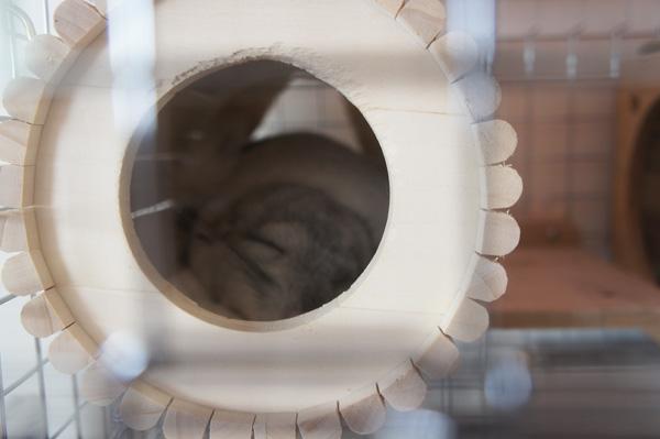 チンチラのティモに選んだ巣箱・ハウス 睡眠用 SBSコーポレーション オリジナル 円筒巣箱
