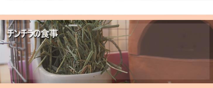 Chinchilla Vie チンチラ「ティモ」とこだわり屋の生活 食事のカテゴリー