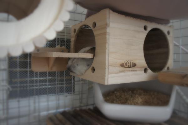 チンチラのティモ カワイのフルハウスの上にマルカンのリバーシブルヒーターを置く 心地よい暖かさでお気に入り