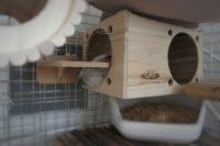 チンチラのティモが喜んだマルカン リバーシブルヒーターのレイアウト フルハウスの上から温かく感じられてぐっすり寝ているティモの様子 チンチラの飼育方法 冬