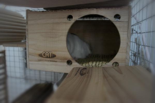 チンチラのティモのための寒さ対策 カワイ フルハウスの上にマルカンのリバーシブルヒーターMサイズをのせる