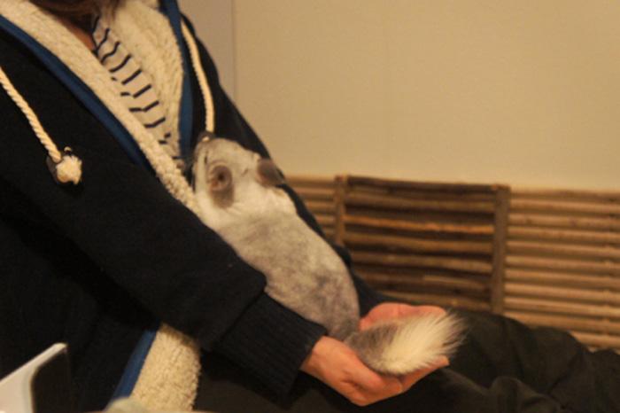冬ならではのチンチラのティモとの遊び方 コミュニケーション