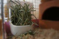 チンチラのティモへの牧草の与え方 いつもの様子