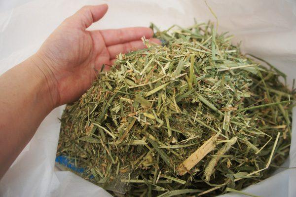 チンチラのティモへの牧草の与え方 混ぜ合わせると粉やカスがいっぱい