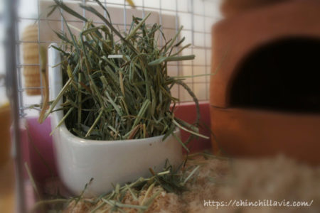 チンチラに理想的な「牧草の与え方」は?新鮮な数種類の牧草を食べ放題の状態を保つことだと思う理由
