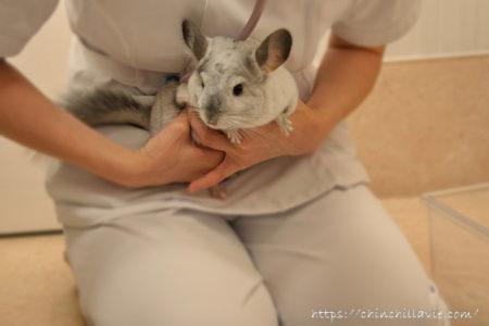 「みわエキゾチック動物病院」にて初めての健康診断