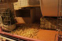 チンチラのティモのケージレイアウト ケージの床 版画板の上に広葉樹のウッドチップ敷き