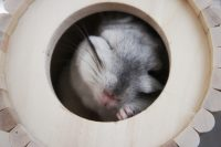 チンチラのティモ お気に入りのSBSコーポレーションさんの円筒巣箱