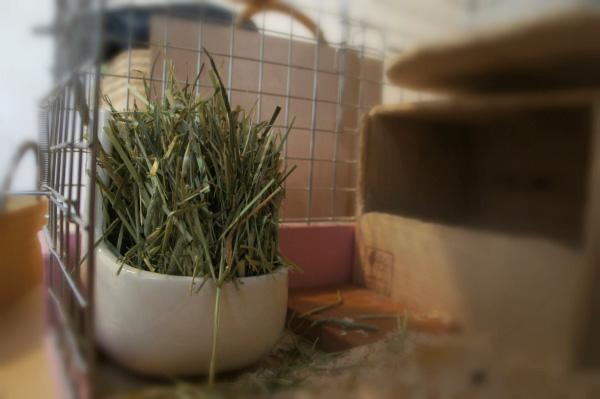 チンチラのティモのケージレイアウト お迎えする前に準備するものリスト 牧草ポット カワイ chinchilla