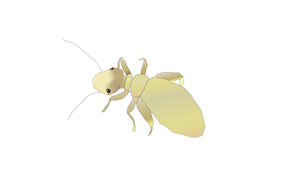 チャタテムシのイメージ イラスト チンチラ「ティモ」の部屋んぽ用カワイ わらっこ倶楽部製品を棲み家にしている昆虫