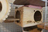 チンチラのティモの暑さ対策 保冷剤入りポーチを巣箱の上に置いてみたところ
