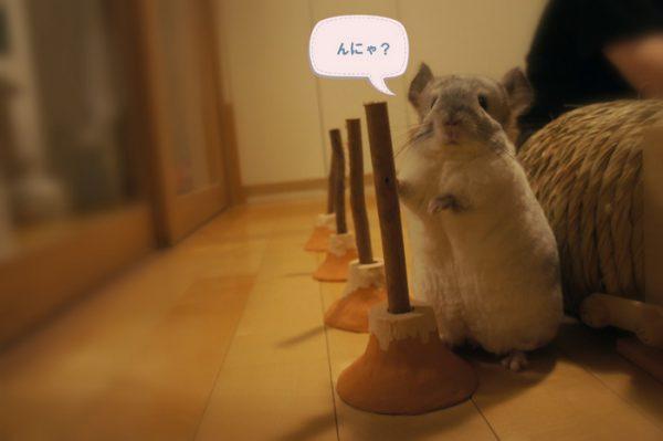チンチラのティモの部屋んぽタイムのおもちゃ がじがじフェンスの富士山