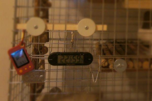 チンチラのティモの温湿度計 2代目 mondi