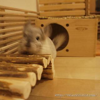 「KAWAI フルハウス」や「三晃商会 木製スノコ」「かじり木スノコ 80」などを組み合わせたチンチラのティモのへやんぽコーナー