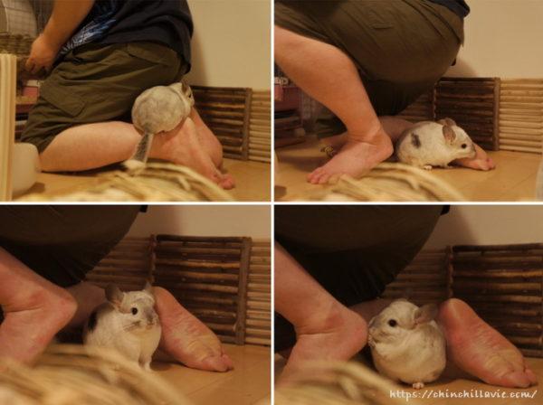 足元をちょろちょろするチンチラのティモを踏まないように細心の注意を払って。
