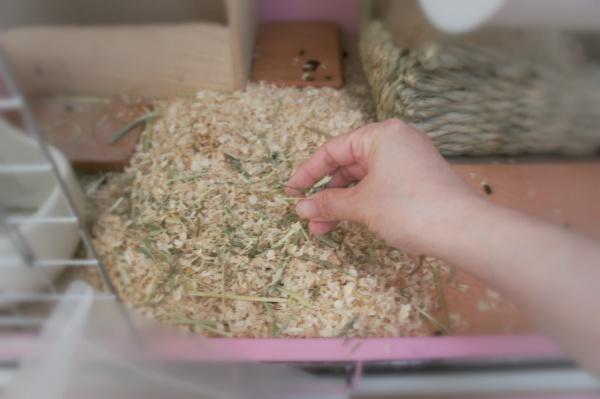 チンチラのティモのためのケージの床環境つくり
