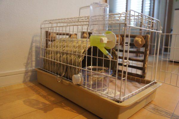 チンチラのティモの移動用キャリーレイアウト ハウスとえさ入れ、給水ボトル、かじり木、床は平らになるようにマットを敷く 三晃商会ライトキャリー