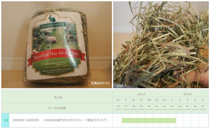 トッピング牧草としてチンチラのティモ(3歳)に与えたチモシー2番刈り BUNNY GARDEN CANADA産やわらかチモシー(茎有りタイプ)