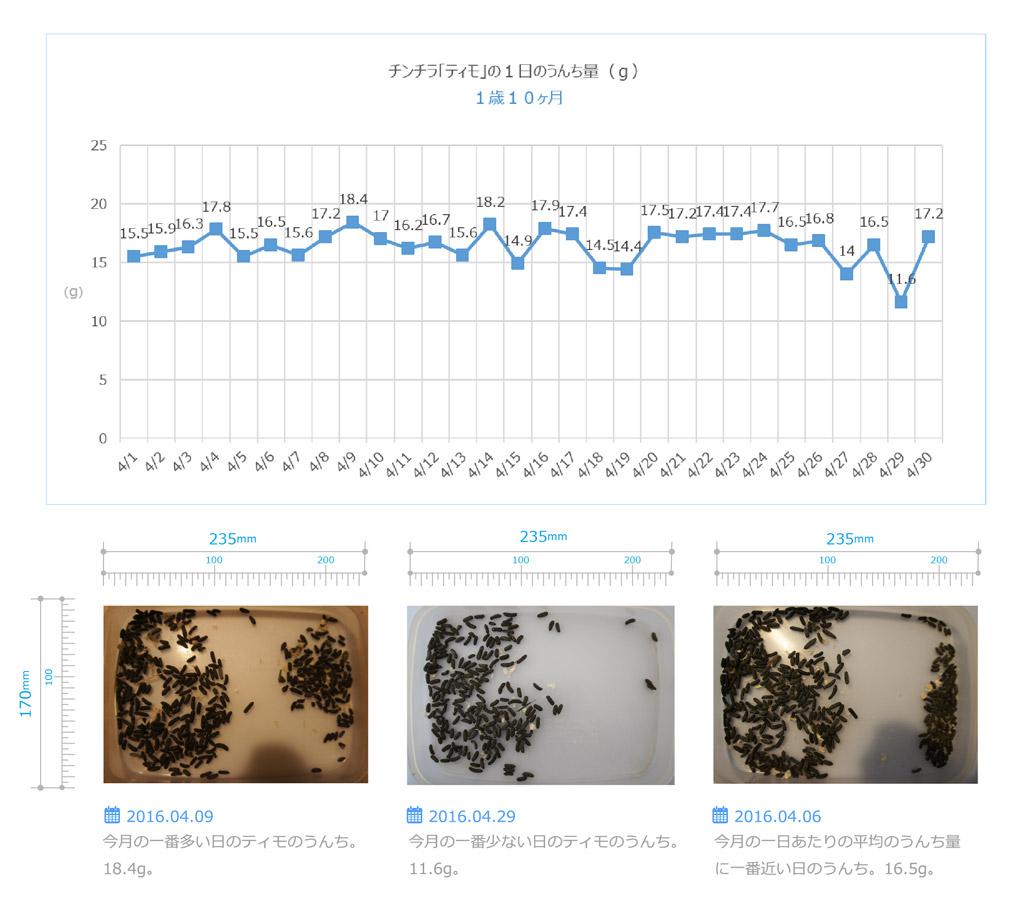 チンチラ「ティモ」の飼育観察記録 生後1歳10ヶ月 1日ごとのうんち量のグラフ