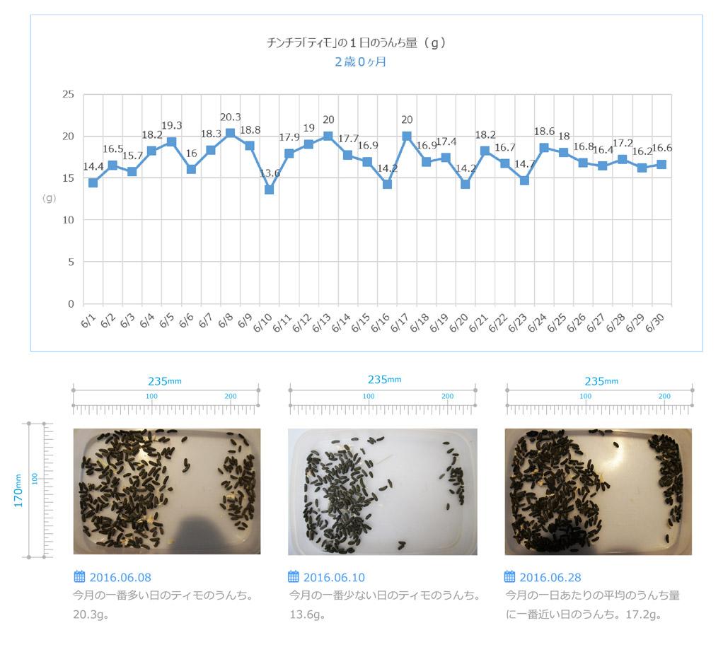 チンチラのティモのうんちの飼育観察記録 生後2歳0ヶ月