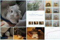 チンチラ「ティモ」の飼育観察記録 生後1歳9ヶ月 chinchilla timo