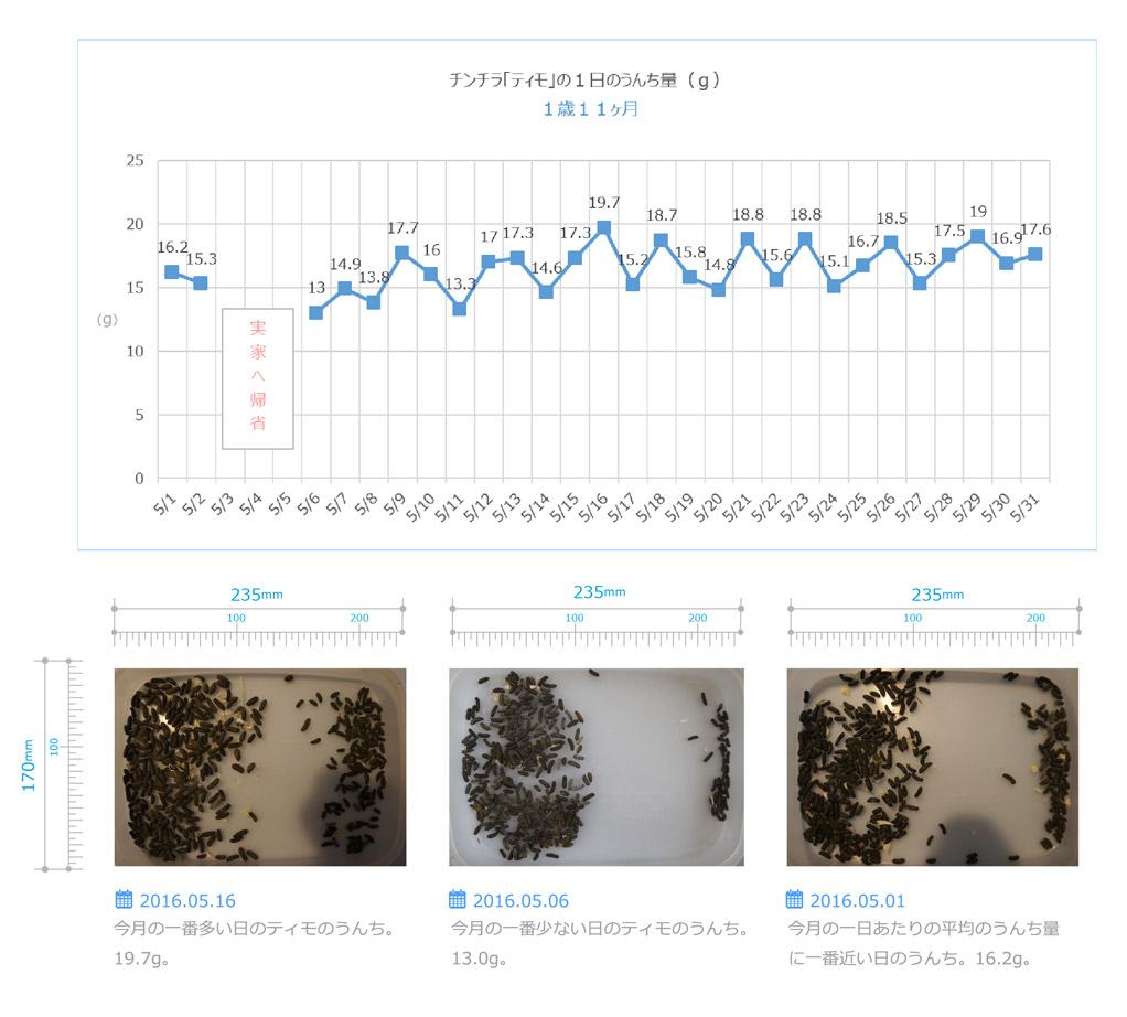 チンチラのティモのうんちの飼育観察記録 生後1歳11ヶ月