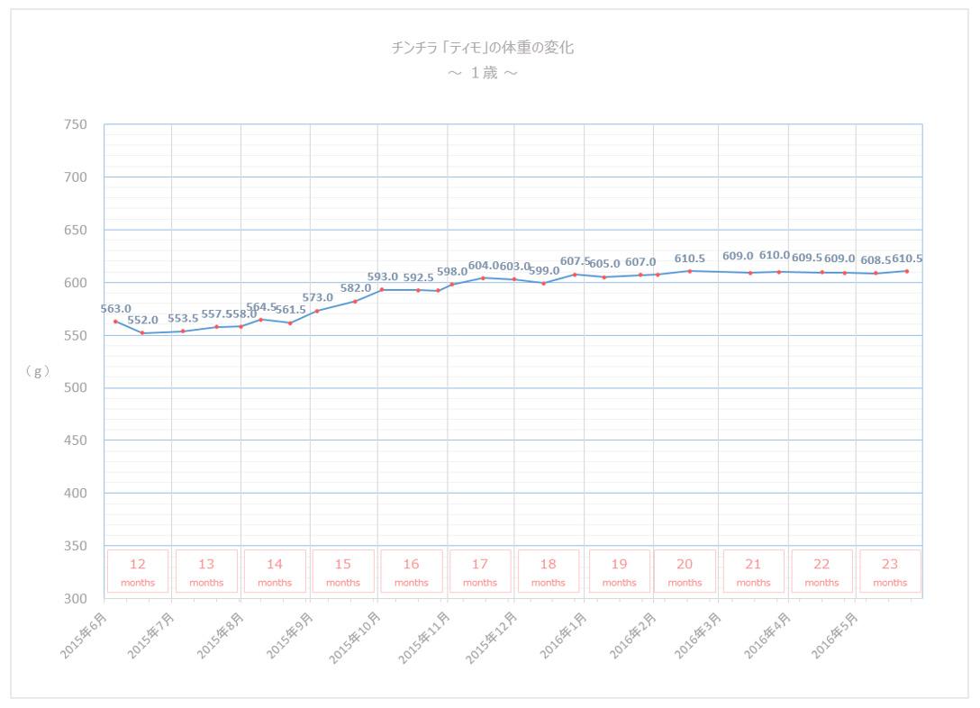 チンチラのティモの体重の変化 1歳 グラフ