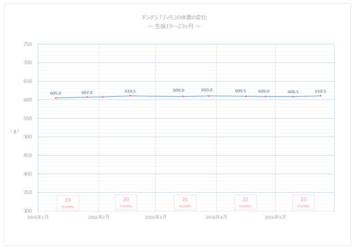 チンチラのティモの体重の変化のグラフ 生後19ヶ月~23ヶ月 とっても安定した様子