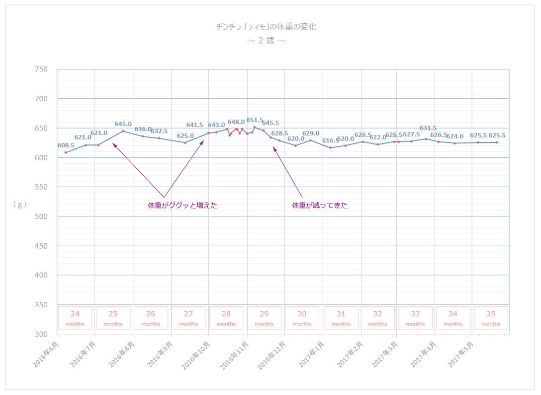 チンチラのティモの体重の変化 2歳 グラフ