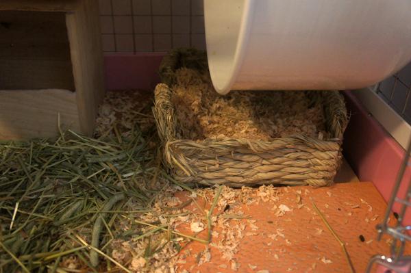 チンチラのティモのケージの床の様子 一晩明けるとウッドチップが散らかされている