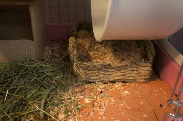 チンチラのティモのケージレイアウト 1Fのおトイレの中にはウッドチップを敷いています