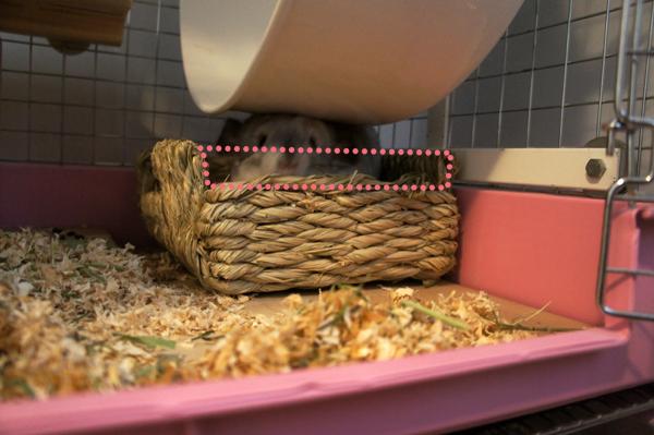 チンチラのティモのケージの1F部分の様子 ホイール回し車の下に置いたトイレは出入りしやすいようにティモが自分で噛んで高さを調節しています