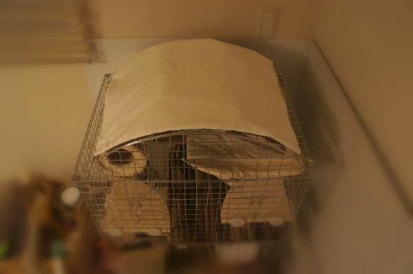 チンチラのティモのケージレイアウト ケージの屋根には視界を遮るためにカバーをのせています