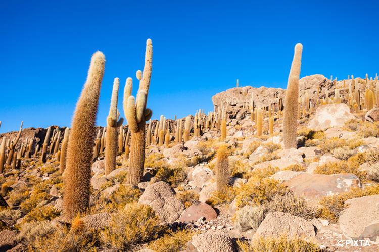 チンチラの故郷 南米大陸 アンデス山脈の西側地帯