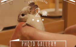 CHINCHILLA 「TIMO」's PHOTO GALLERY ~ 2 years old ~