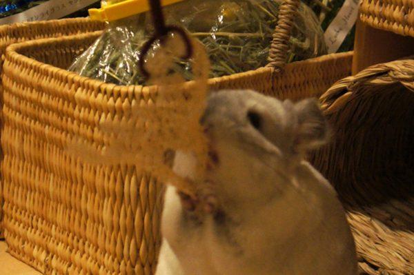 うさぎ星さんのへちまを使ったチンチラ「ティモ」のための手作りおもちゃ