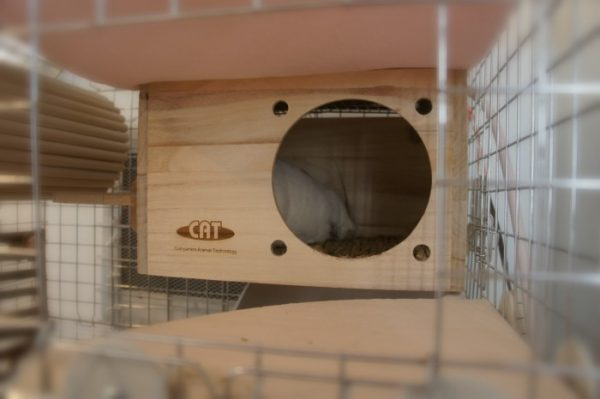 KAWAI フルハウスの上に置かれた「マルカン ほっとうさ暖 リバーシブルヒーターMサイズ」の暖かさを感じながら熟睡しているチンチラのティモ