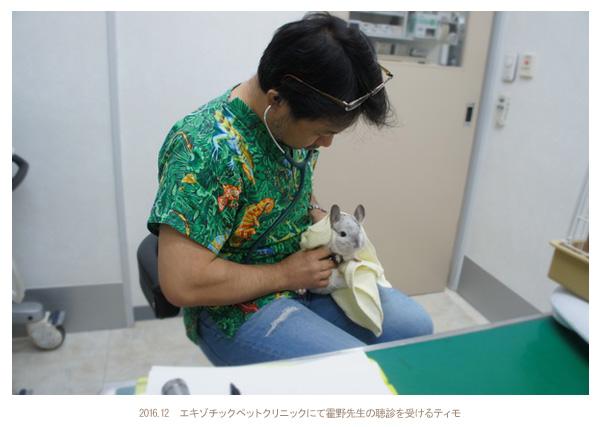 エキゾチックペットクリニックにて霍野晋吉先生の聴診を受けるティモの様子