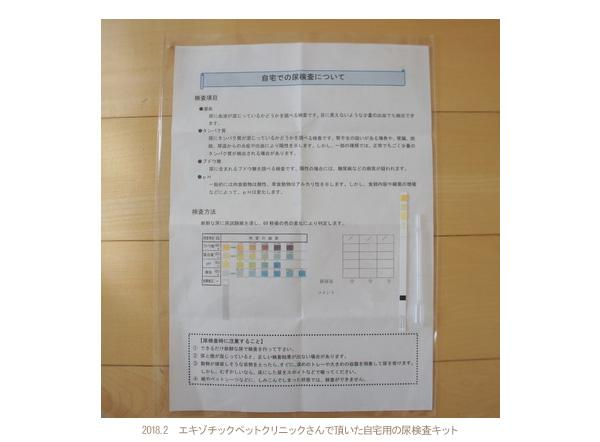 エキゾチックペットクリニックさんで頂いた自宅用の尿検査キット