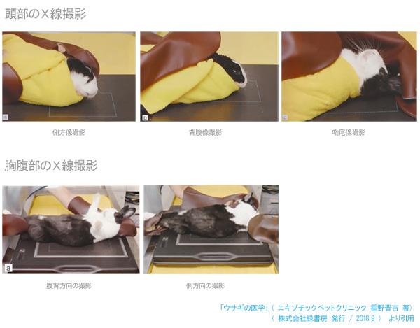 ウサギの頭部と胸腹部のX線撮影の様子 「ウサギの医学」(エキゾチックペットクリニック 霍野晋吉著)より引用