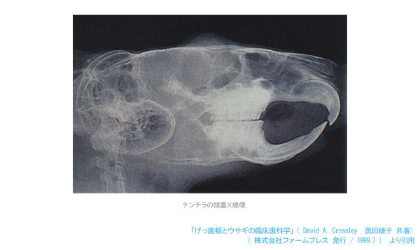 チンチラの頭蓋X線像 「げっ歯類とウサギの臨床歯科学」(David A. Crossley・奥田綾子 共著)より引用