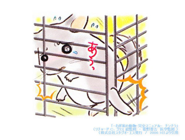 ケージ金網の桟の隙間に後肢を挟まないように注意が必要な様子 「-わが家の動物・完全マニュアル- チンチラ」(Richard C.Goris 総監修 霍野晋吉 医学監修 / 株式会社スタジオ・エス発行 / 2000.10)
